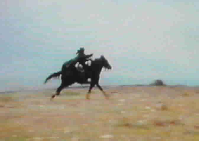Zorro riding Toronado #2